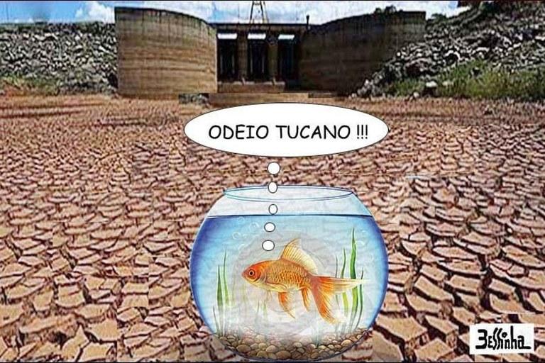 bessinha peixe odeia tucano